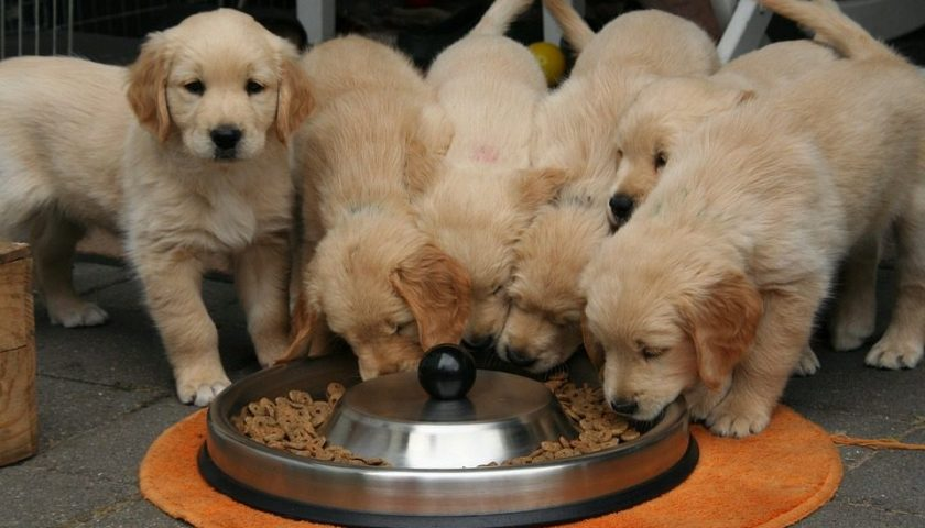 How to Program an Automatic Dog Feeder the Right Way? - Post Thumbnail